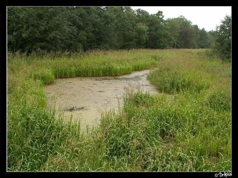 древние допотопные водные каналы ладоги